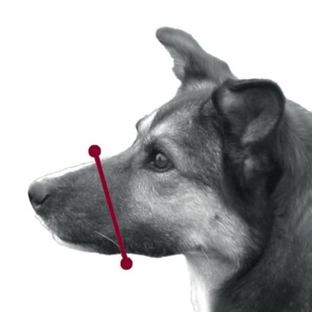 Materiałowy kaganiec z halterem dla psa - czarny