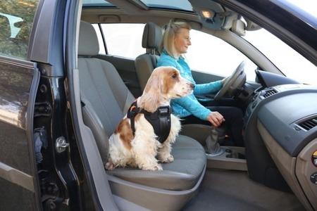 Szelki samochodowe dla psa rozmiar XL Czarne